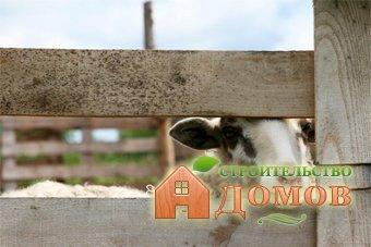 Сарай для овец: нормы строительства и обустройства