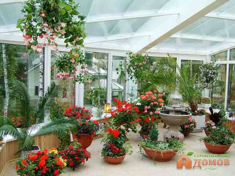 Цветы в зимних садах фото