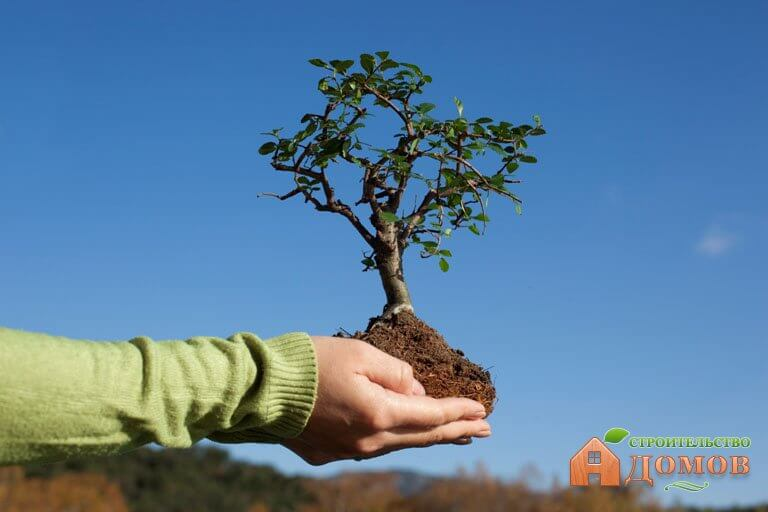 Посадка декоративных деревьев – в какие сроки и как она должна происходить?
