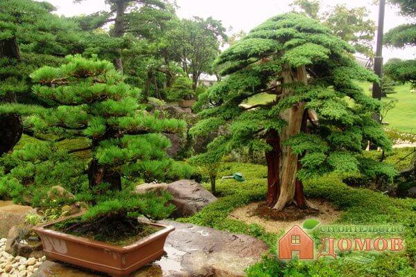 Карликовые декоративные деревья: время посадки, уход