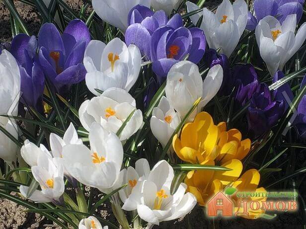 Весенние садовые цветы. Лучшие разновидности, места для их высадки