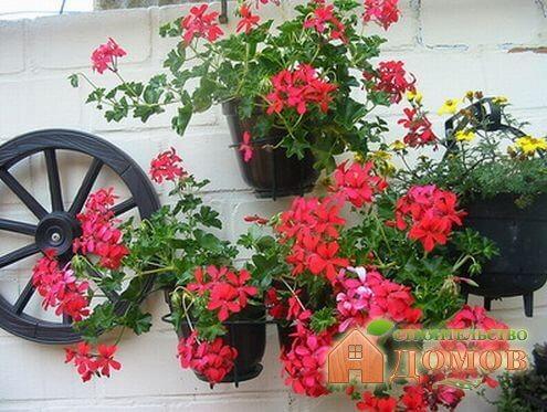 Ампельные цветы для сада: высадка, уход, создание композиций