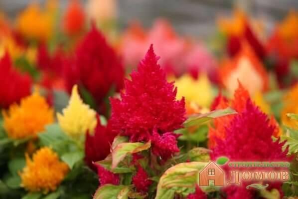 Цветы однолетники для сада: всё об их выборе