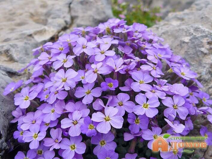 Теневыносливые цветы для сада: весенние и летние представители