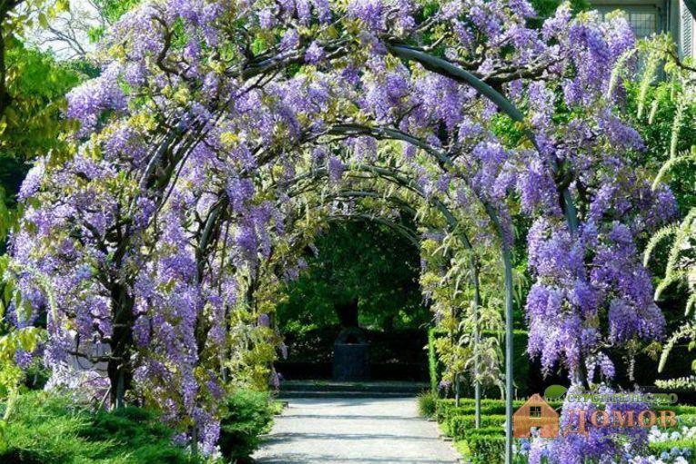 Вьющиеся цветущие растения: разновидности, представители, уход